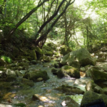 新技術「環境DNA」で生態系の研究 福岡工業大学