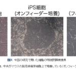 東京工業大学が、iPS細胞の放射線応答性を明らかに