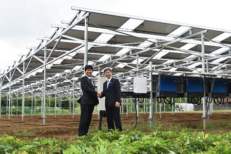 清水建設、千葉県の若手農業法人と共同で営農型太陽光発電事業を展開
