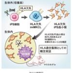 iPS細胞から拒絶反応の無い血小板を作製することに成功