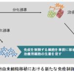 iPS細胞から、移植拒絶されない皮膚細胞を作製することに成功