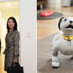 ソニー・ロボットaiboとセコム・ホームセキュリティの連携サービスを開始