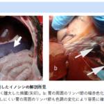 アフリカ豚熱は二ホンイノシシにも感染することを発見