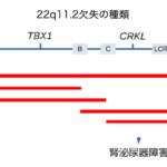 大阪大学などが、染色体欠損で起こる難病のメカニズムを推定
