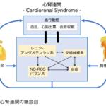 筑波大学が、ヒスタミン受容体の心腎機能改善効果を発見