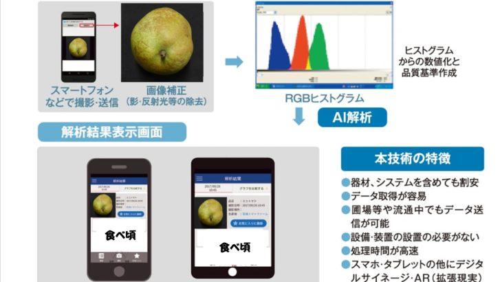 産学共同研究による果物の熟度判定(食べごろ見える化)アプリの開発